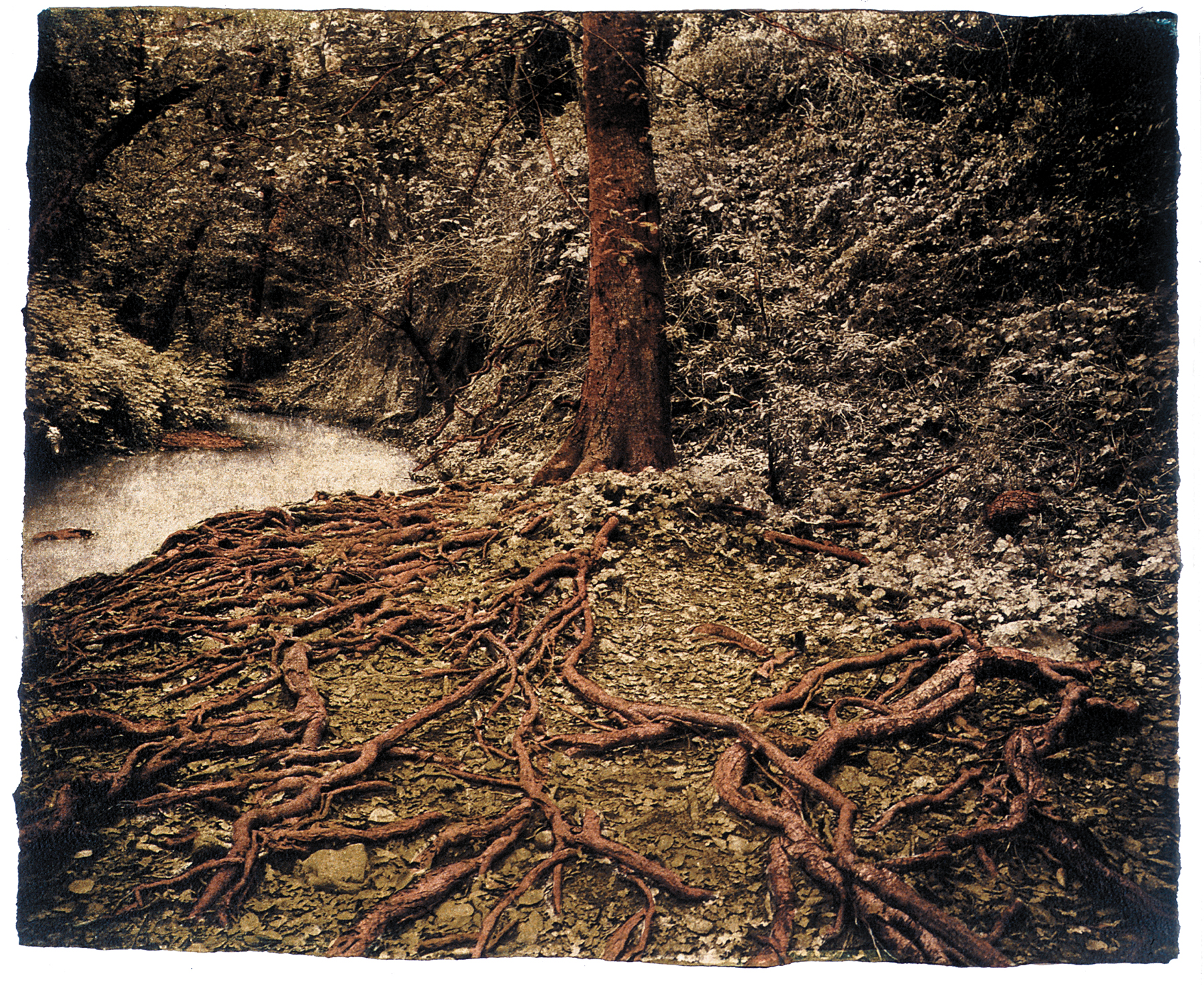 Brian Taylor Eroded Roots exposed